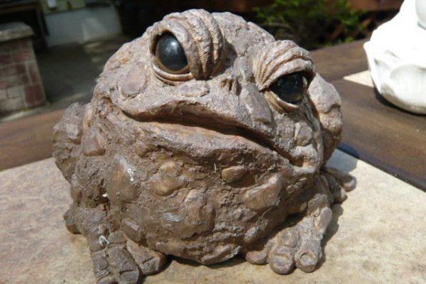 Purpose Toad